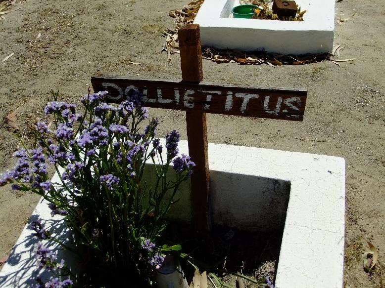 Titus, Dollie