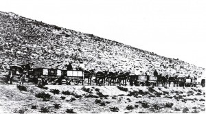Namaqualand_mule_train